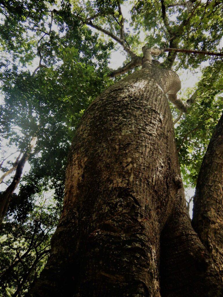 Marundwa: árbol del conocimiento.