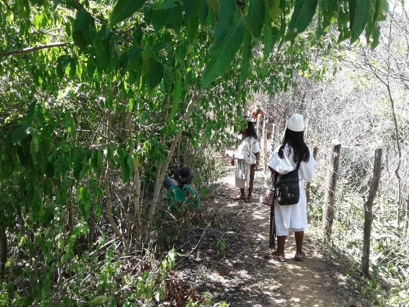 Especies del Bosque Seco de la Sierra Nevada | Confederación Indígena Tayrona